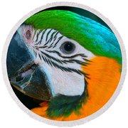 Blue And Gold Macaw Headshot Round Beach Towel