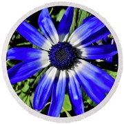 Blue And White African Daisy Round Beach Towel