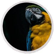 blue and yellow Macaw Round Beach Towel