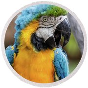 Blue And Yellow Macaw Vertical Round Beach Towel