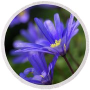 Blue Anemone  Round Beach Towel