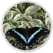 Blue-banded Swallowtail Butterfly Round Beach Towel