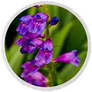 Blue Bells Wild Flower Round Beach Towel