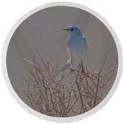 Blue Bird Colored Pencil Round Beach Towel