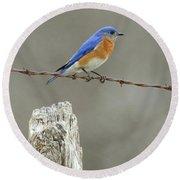 Blue Bird On Barbed Wire Round Beach Towel