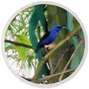 Blue Bird With A Curved Bill Round Beach Towel