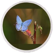 Blue Butterfly On Leaf Round Beach Towel