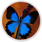 Blue Butterfly On Violin Round Beach Towel