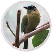 Blue-crowned Motmot Round Beach Towel