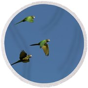 Blue-crowned Parakeets In Flight Round Beach Towel
