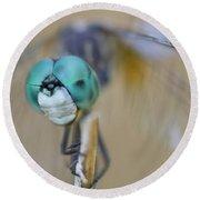 Blue Dasher Dragonfly #1 Round Beach Towel
