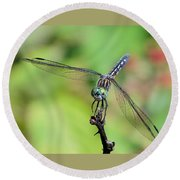 Blue Dasher Dragonfly On A Branch Round Beach Towel