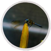 Blue Dhasher Dragonfly Round Beach Towel