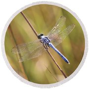 Blue Dragonfly Against Green Grass Round Beach Towel