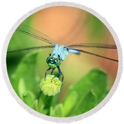 Blue Dragonfly And Bud Round Beach Towel