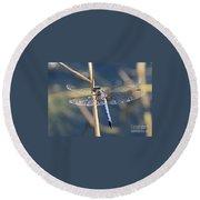 Blue Dragonfly Round Beach Towel by Carol Groenen