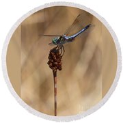 Blue Dragonfly On Brown Reed Round Beach Towel
