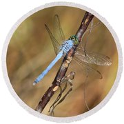 Blue Dragonfly Portrait Round Beach Towel by Carol Groenen