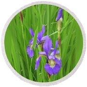 Blue Flag Iris-1  Round Beach Towel