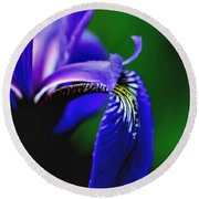 Blue Flag Iris Round Beach Towel