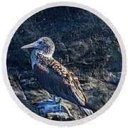 Blue-footed Booby Prize Round Beach Towel