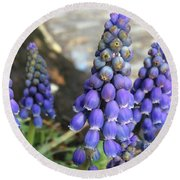 Blue Grape Hyacinths Round Beach Towel