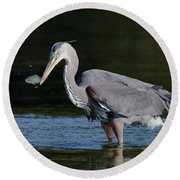 Blue Heron - Fish By The Tail Round Beach Towel