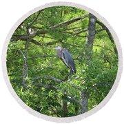 Blue Heron In Green Tree Round Beach Towel