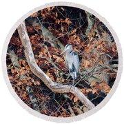 Blue Heron In Tree Round Beach Towel
