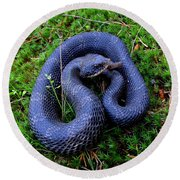 Blue Hognose Round Beach Towel