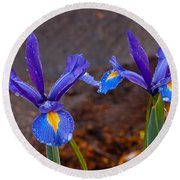 Blue Iris Germanica Round Beach Towel