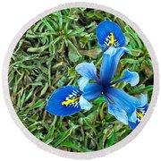 Blue Iris Hermodactyloides Round Beach Towel