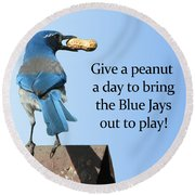 Blue Jay And A Peanut Round Beach Towel