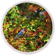 Blue Jay And Berries Round Beach Towel