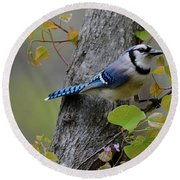 Blue Jay In Red Bud Round Beach Towel