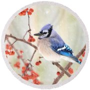 Blue Jay In Snowfall Round Beach Towel