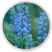 Blue Lupine In The Tetons  Round Beach Towel