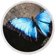 Blue Morpho #2 Round Beach Towel