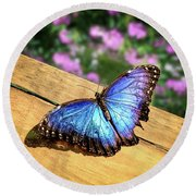 Blue Morpho Butterfly On A Wooden Board Round Beach Towel