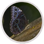Blue Morpho.. Round Beach Towel