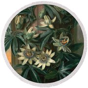 Blue Passion Flower For The  Temple Of Flora By Robert Thornton Round Beach Towel