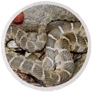 Montreat Water Snake Round Beach Towel