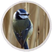 Blue Tit On Reed Round Beach Towel