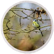 Blue Tit Woods Round Beach Towel