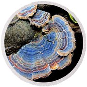 Blue Turkeytail Fungi Round Beach Towel