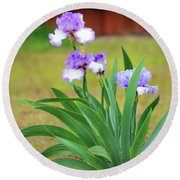 Blue Violet Irises  Round Beach Towel
