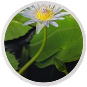 Blue Water Lily Round Beach Towel