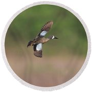 Blue-winged Teal In Flight Round Beach Towel