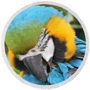 Blue/yellow Parrot Round Beach Towel