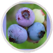 Blueberries On The Vine 2 Round Beach Towel